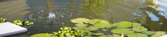Horseshoe Group Landscaping Irrigation and Ponds